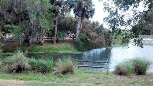 And now Gemini Springs Park, it was a beautiful day in a beautiful place!